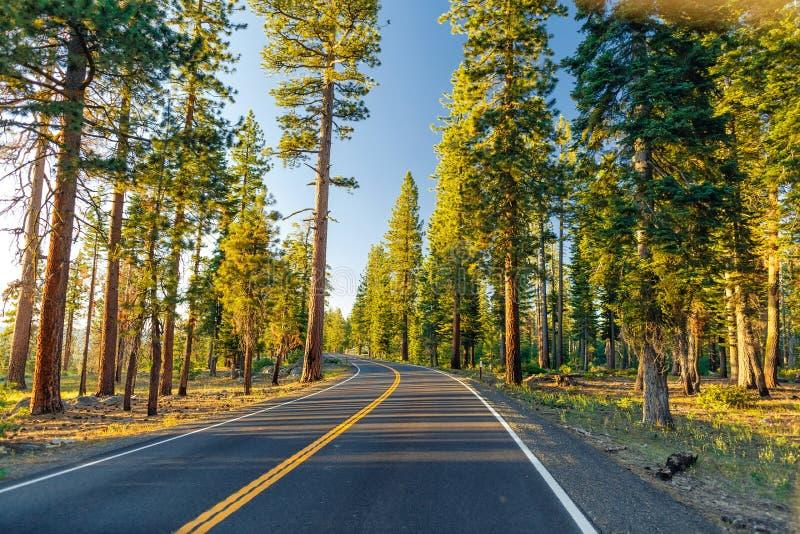 Красивая дорога между лесом во время захода солнца на национальном парке Калифорнии Yosemite стоковое фото rf