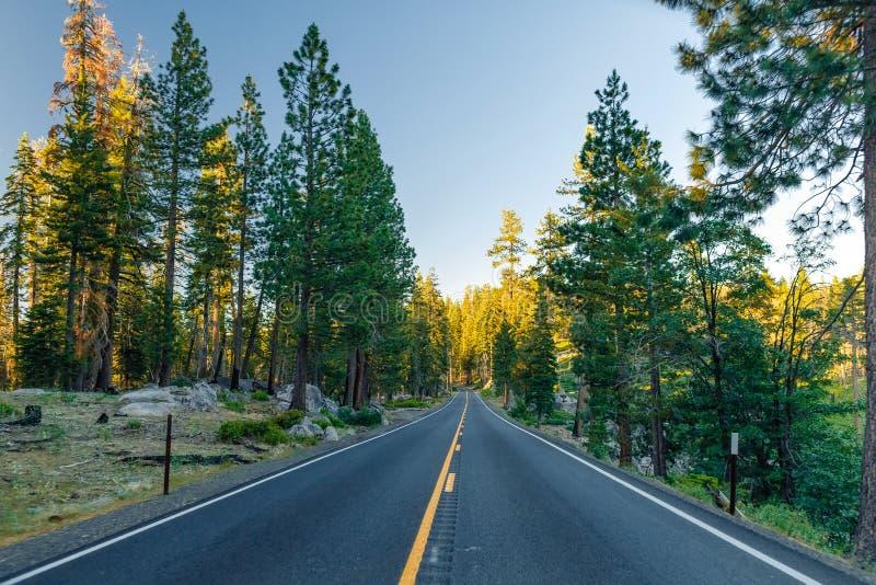 Красивая дорога между лесом во время захода солнца на национальном парке Калифорнии Yosemite стоковые фото