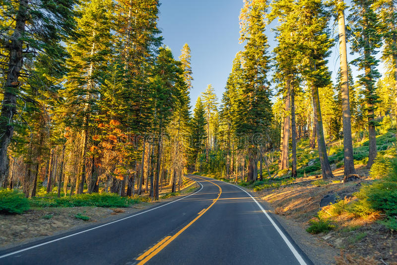 Красивая дорога между лесом во время захода солнца на национальном парке Калифорнии Yosemite стоковая фотография