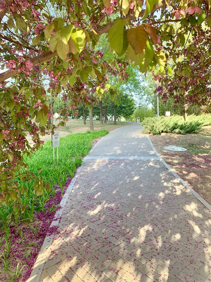 Красивая дорога с цветками и деревьями стоковое фото rf