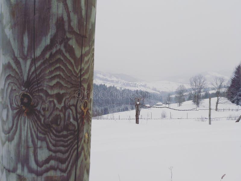 Красивая древесина стоковая фотография