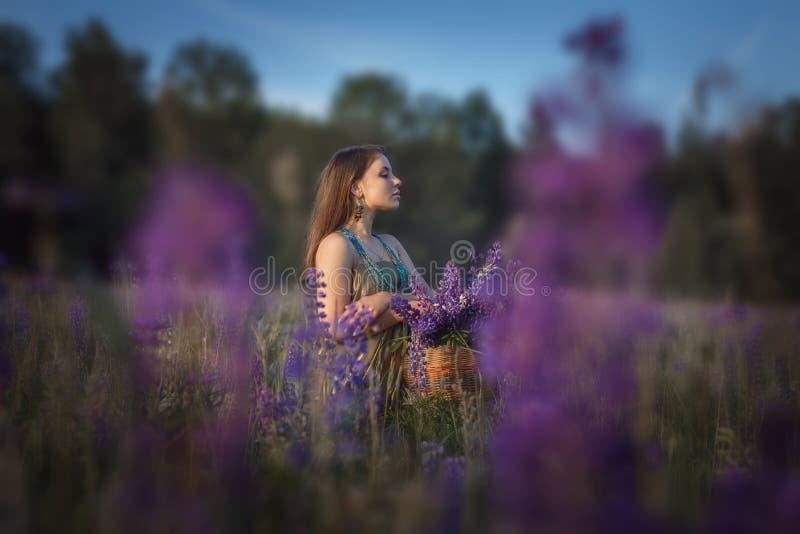 Красивая девушка в поле lupine стоковые изображения