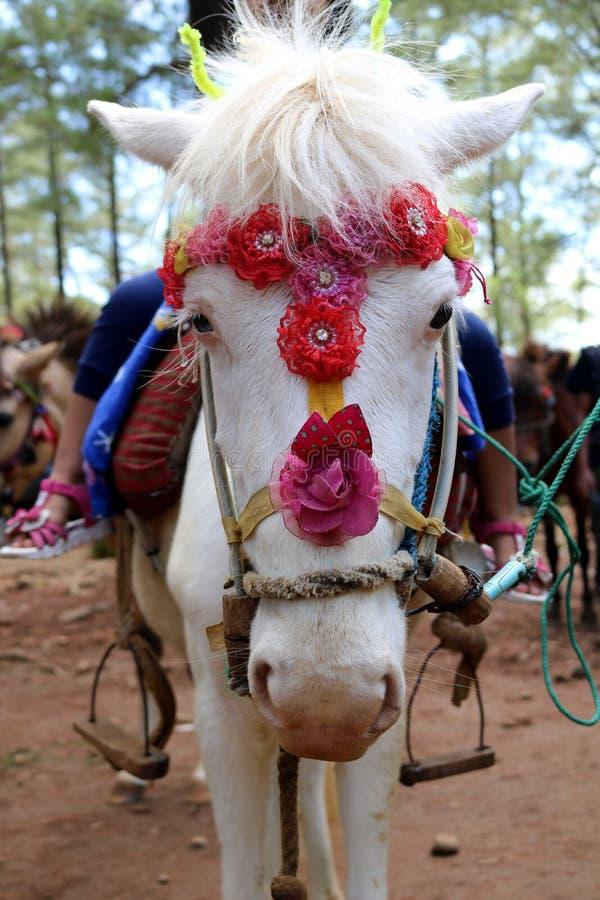 Красивая езда белой лошади стоковая фотография rf