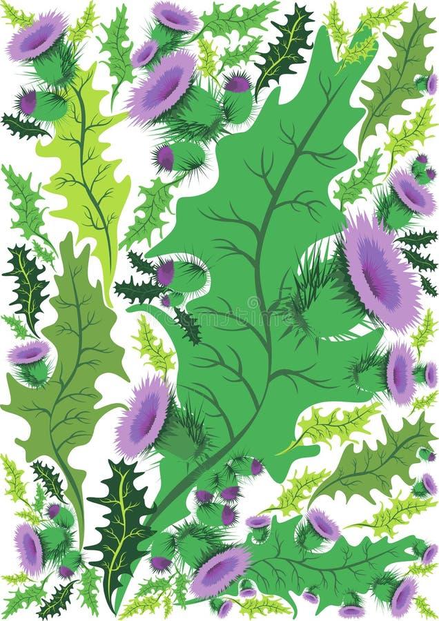 Красивая декоративная граница thistle цветков иллюстрация вектора