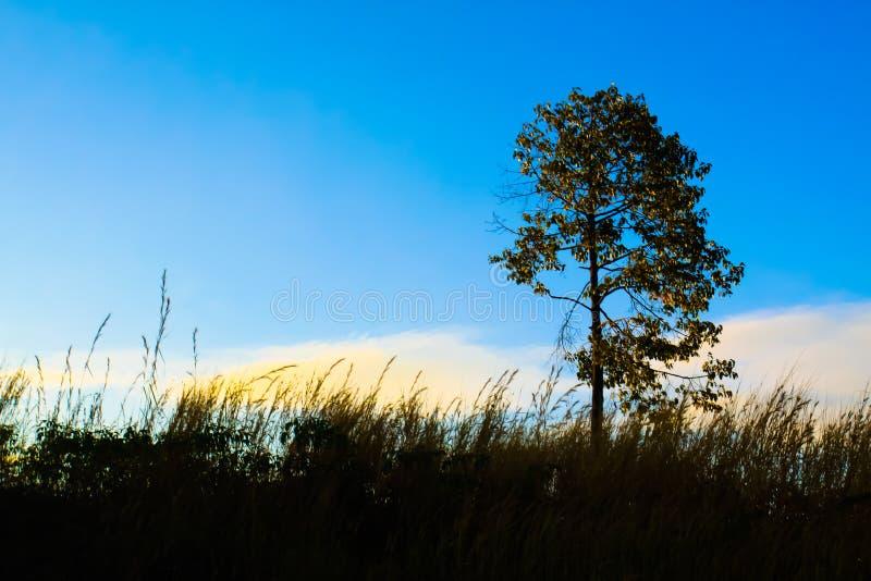 Красивая естественная земля голубого неба дерева взгляда ландшафта стоковые фото