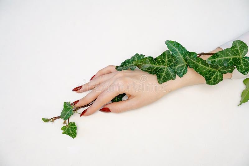 Красивая женская рука лежа на белой предпосылке с хворостиной с зелеными листьями, концепцией заботы руки стоковые изображения