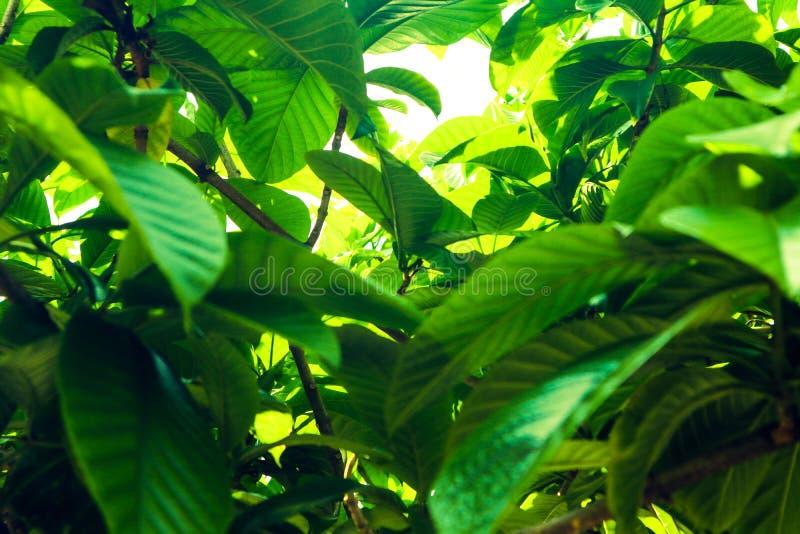 Красивая зеленая предпосылка дерева, заводов, леса и цветков в открытых садах стоковая фотография rf