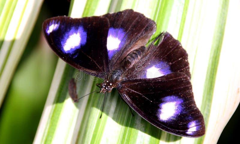 Красивая и милая бабочка стоковые фото