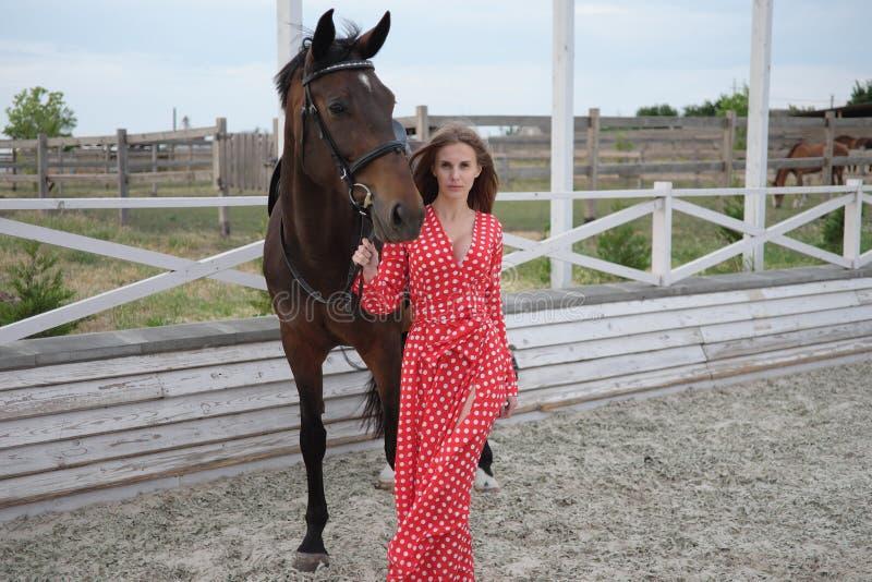 Красивая и сексуальная блондинка с большими грудями в красном платье и лошади коричневых костюмов стоковая фотография