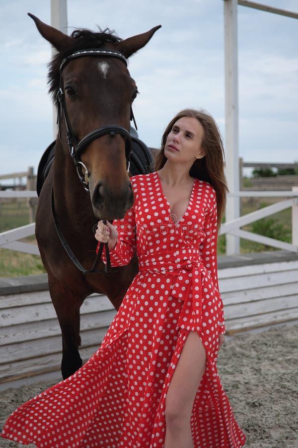 Красивая и сексуальная блондинка с большими грудями в красном платье и лошади коричневых костюмов стоковые фотографии rf