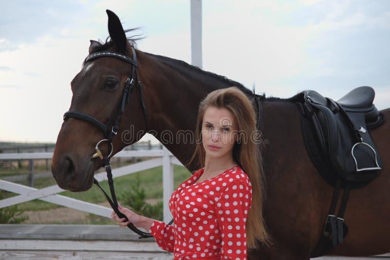 Красивая и сексуальная блондинка с большими грудями в красном платье и лошади коричневых костюмов стоковое фото rf