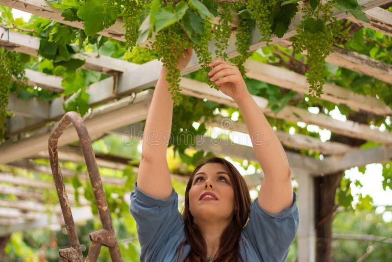 Красивая кавказская девушка фермера в винограднике стоковое изображение rf