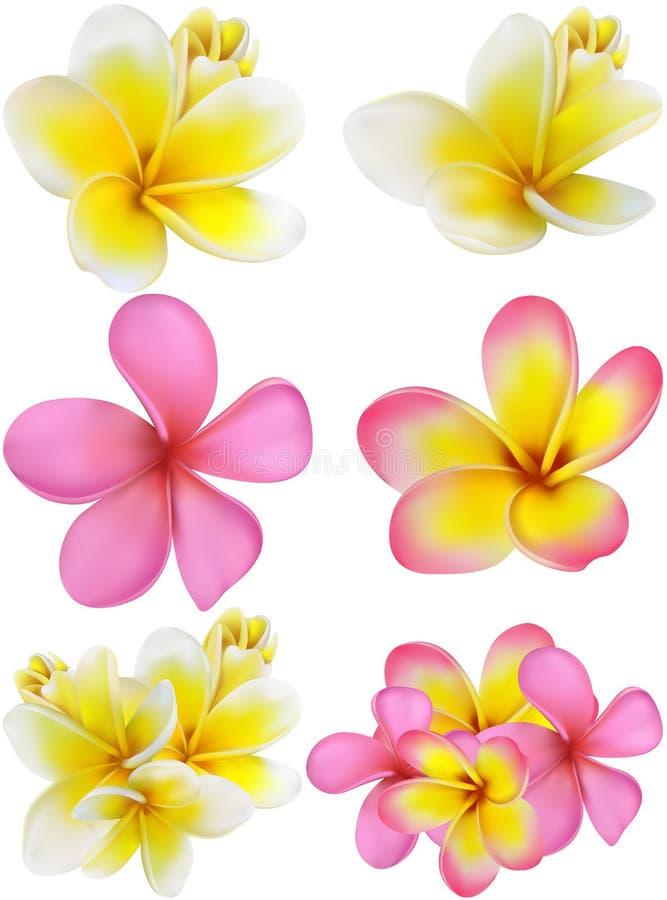 Красивая карточка подарка с желтыми и розовыми plumerias иллюстрация штока