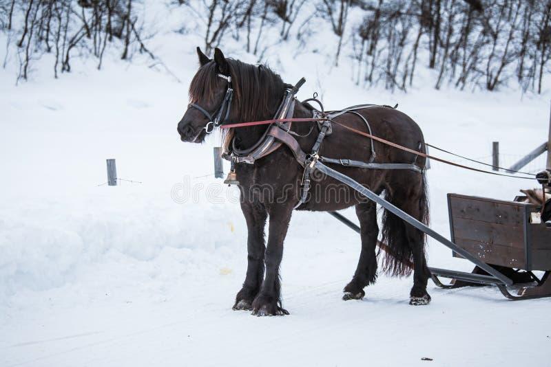 Красивая коричневая лошадь вытягивая скелетон стоковое фото