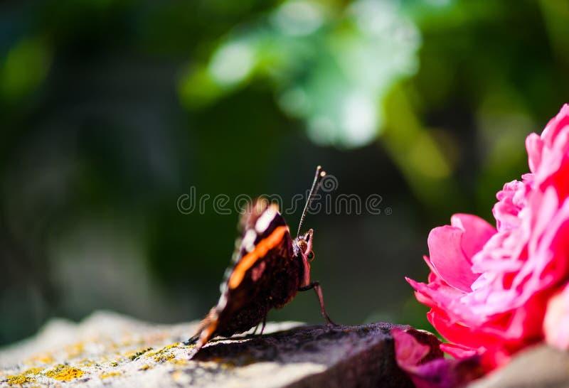 Красивая красочная бабочка стоковые фотографии rf