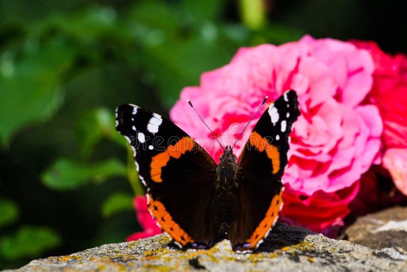 Красивая красочная бабочка стоковое изображение
