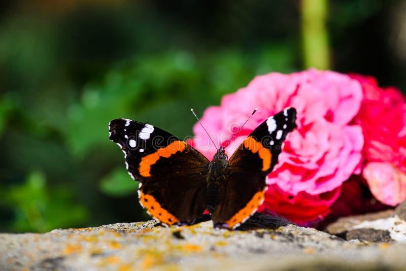 Красивая красочная бабочка стоковая фотография