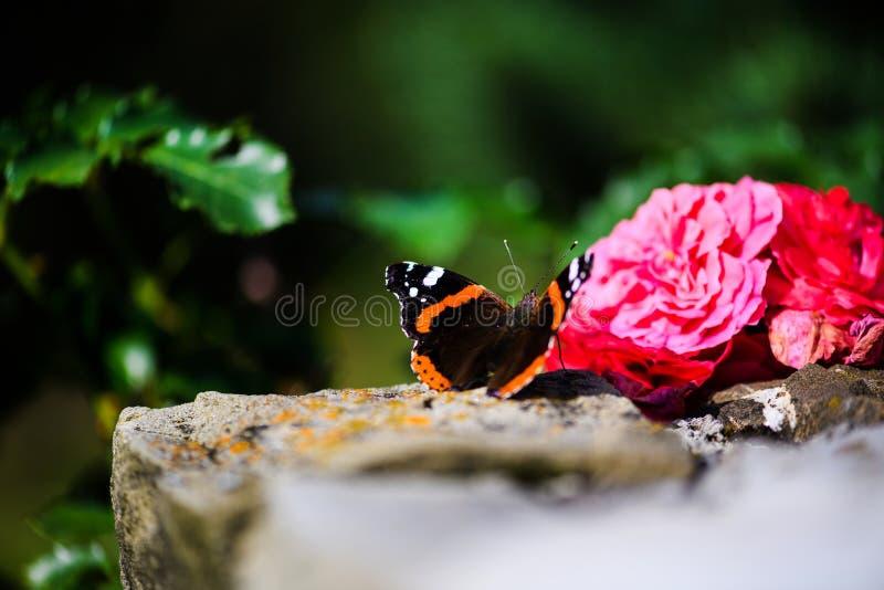 Красивая красочная бабочка стоковое фото rf