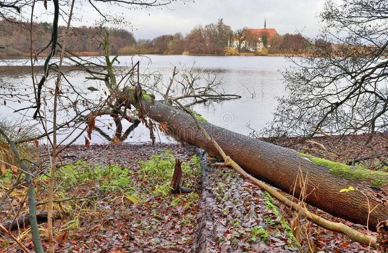 Красивая крона дерева принятого в осень стоковое фото rf