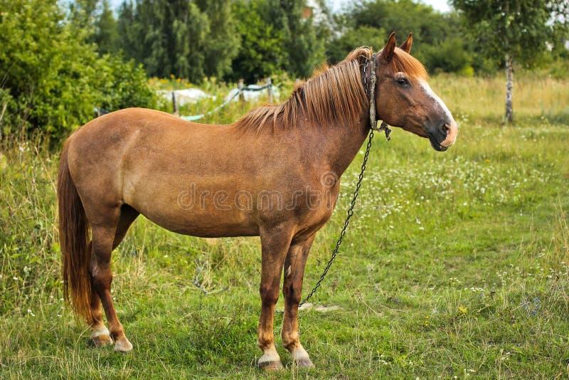 Красивая лошадь в саде Конец лошади вверх стоковая фотография