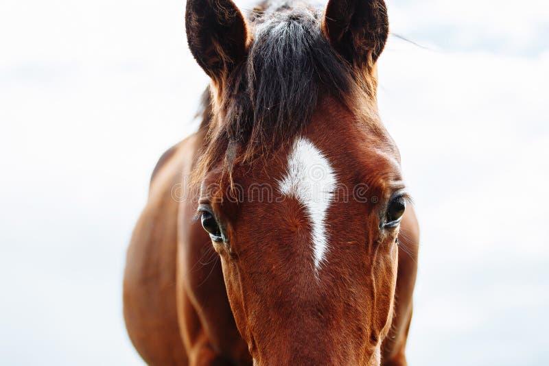 Красивая лошадь ест траву в поле стоковые фото