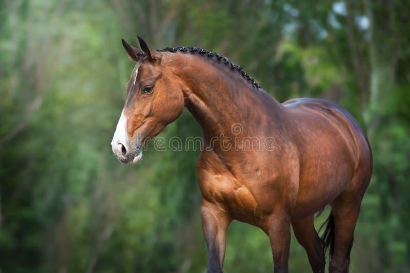 Красивая лошадь на открытом воздухе стоковое фото
