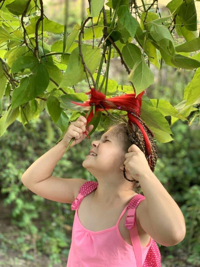 Красивая маленькая девочка Девушка с африканскими оплетками стоковые фотографии rf