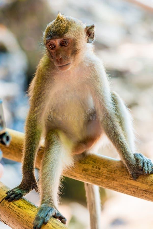 Красивая маленькая обезьяна стоковая фотография rf
