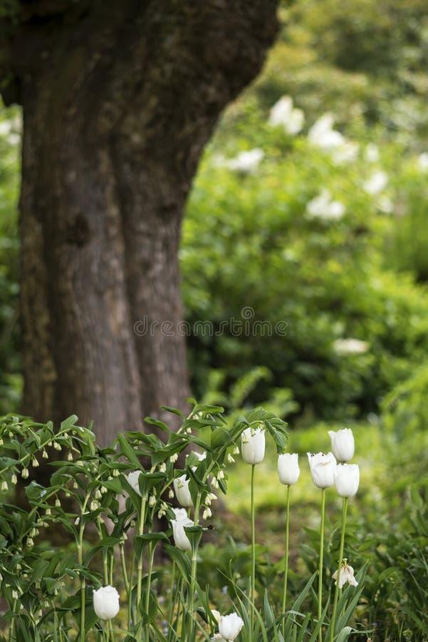 Красивая малая глубина ландшафта поля в английском countrysid стоковое фото rf