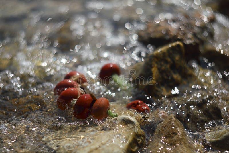 Красивая медленная цепь flooding волны моря красной рыбной ловли плавает Стрельба с винтажным объективом, отмелый DOF стоковые изображения rf