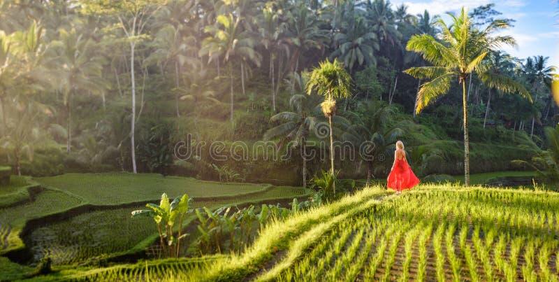 Красивая модель в красном платье на террасе 18 риса Tegalalang стоковые фотографии rf