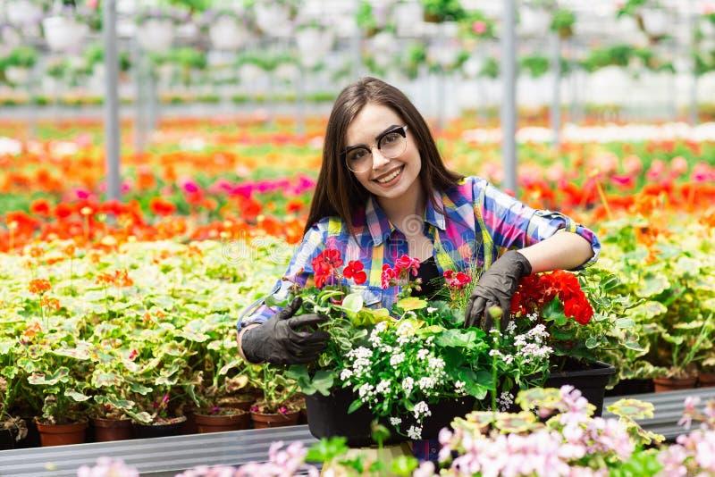 Красивая молодая усмехаясь девушка в стеклах, работник с цветками в парнике Работа концепции в парнике r стоковая фотография rf