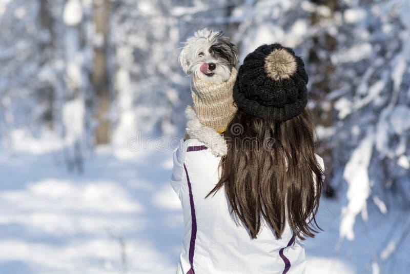 Красивая молодая женщина обнимая ее малую белую собаку в лесе зимы идя снег время стоковые изображения