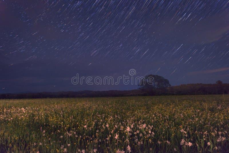 Красивая ноча в цветя долине, сценарный ландшафт с одичалыми растущими цветками и голубое звёздное небо, звезда отстают стоковое фото rf