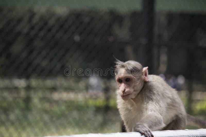 Красивая обезьяна стоковое изображение rf