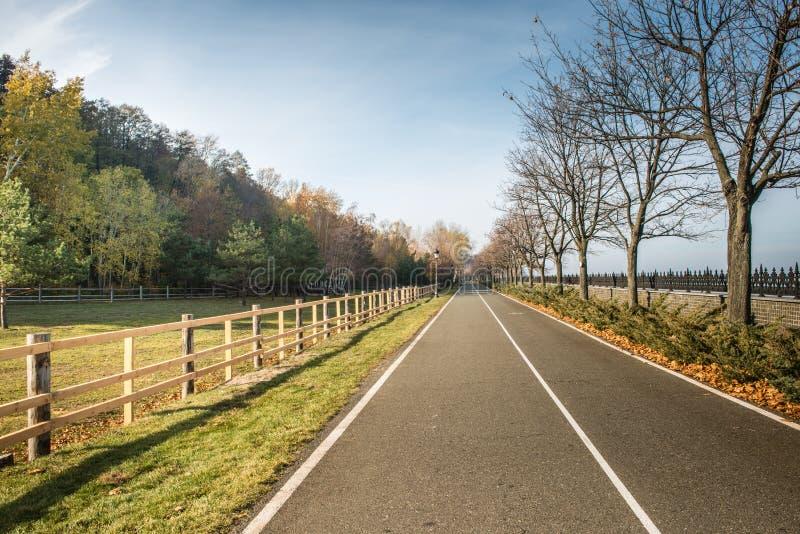 Красивая дорога в лесе осени стоковое фото rf