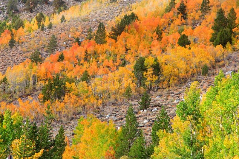 Красивая осень в горах сьерра-невады стоковые изображения rf