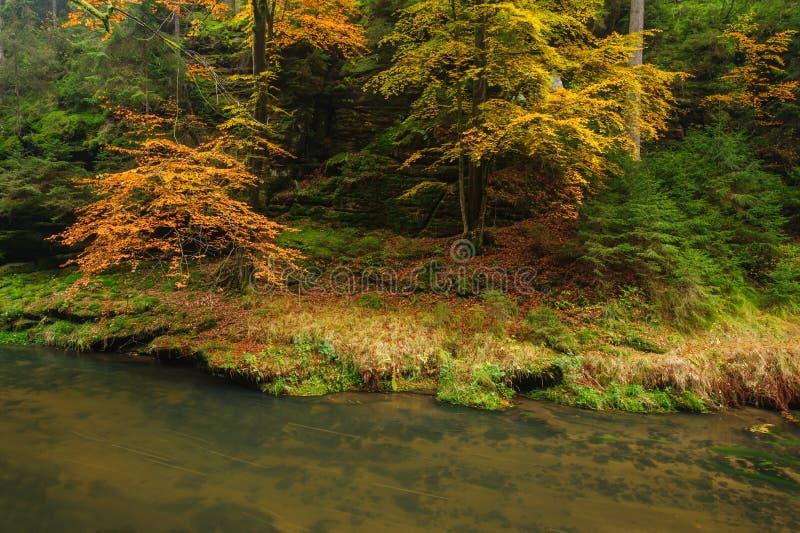 Красивая осень красит реку стоковая фотография rf