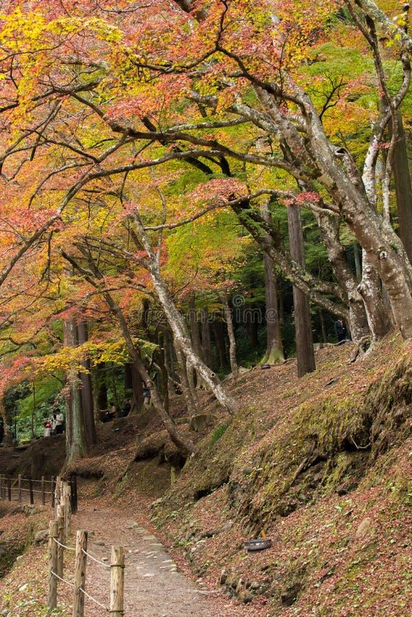 Красивая осень на Korankei стоковая фотография rf
