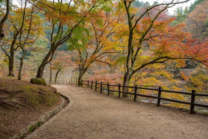 Красивая осень на Korankei стоковые фотографии rf