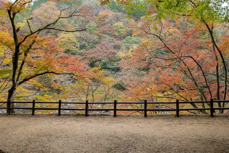 Красивая осень на Korankei стоковые фото