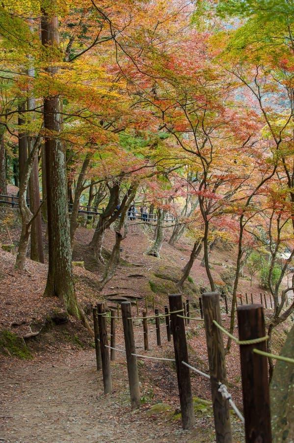Красивая осень на Korankei стоковое изображение rf