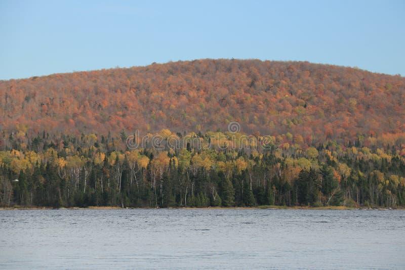 Красивая осень цветов, Tadoussac, Квебек стоковые фотографии rf