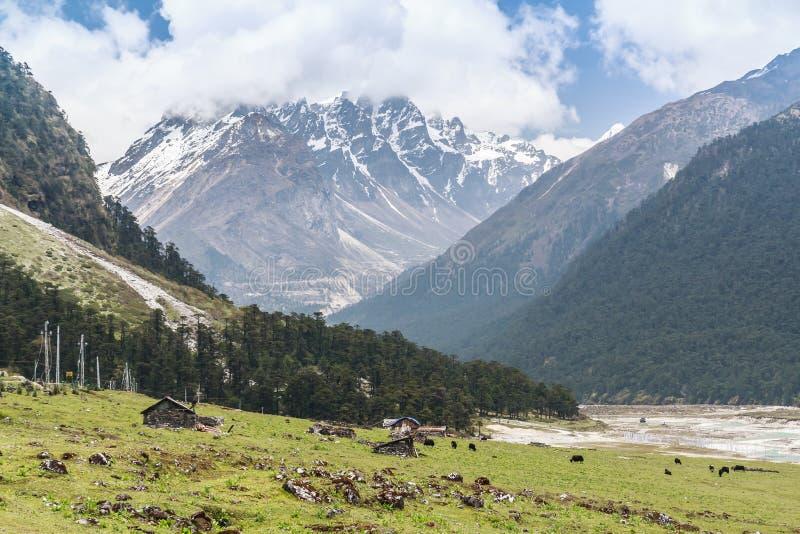 Красивая долина SIKKIN Yumthang горы стоковое фото