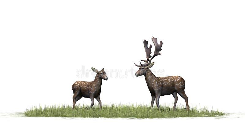 Красивая пара оленей в зеленой траве иллюстрация штока