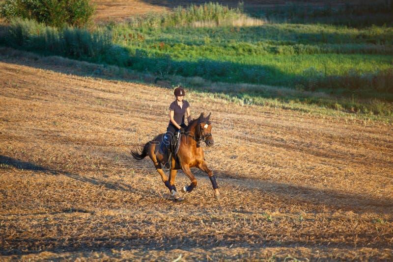 Красивая пастушка женщины элегантности, ехать лошадь Имеет тонкое тело спорта Люди и животные конноспортивно стоковое фото