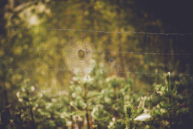 Красивая паутина стоковая фотография rf