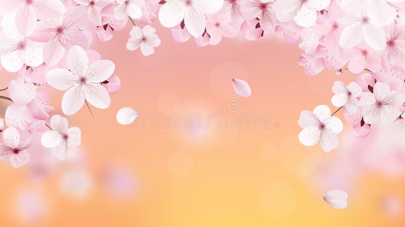 Красивая печать с цвести светом - розовые цветки и место Сакуры для текста Вишня на предпосылке захода солнца реалистическо бесплатная иллюстрация