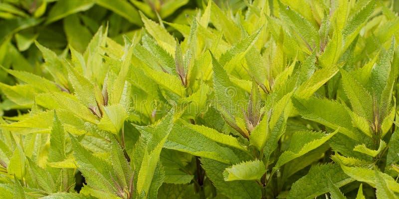 Красивая плотно растущая трава со свежей листвой украшает парк или сад лета стоковая фотография