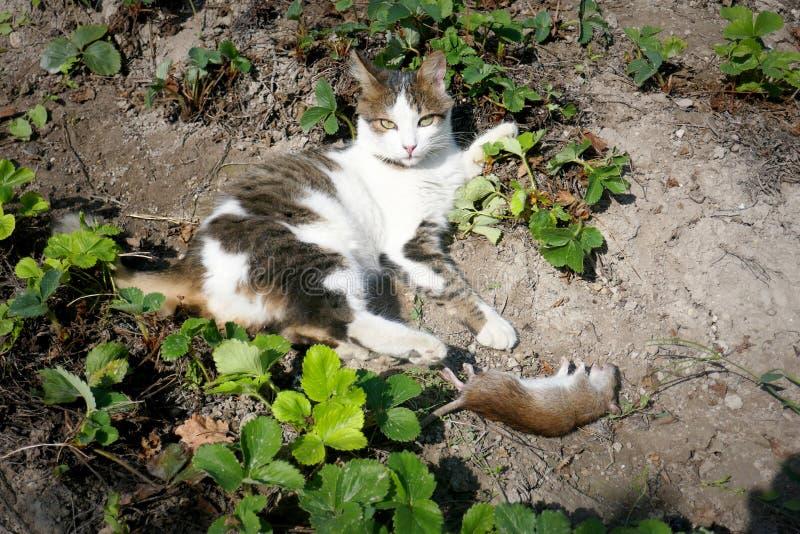 Красивая потеха кота и ухищренно играет при захваченное стоковые изображения
